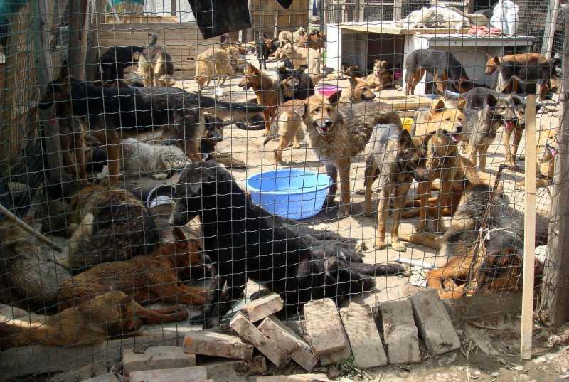 China-Dogs-Rescued_Neaf3.jpg