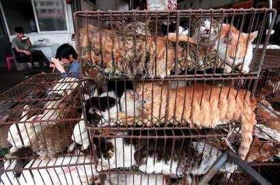 china_cats.jpg
